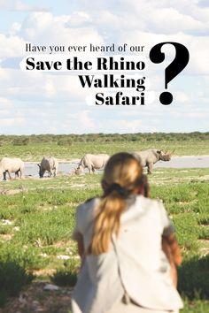 Save The Rhino Walking Safari – Animal Kingdom Save The Rhino, Safari Animals, Africa Travel, Far Away, Animal Kingdom, Conservation, Mammals, Walking, African