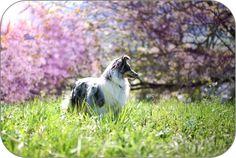 Tipps und Tricks worauf man beim Hund im Frühling achten sollte Sheltie, Birds, Animals, Tips And Tricks, Animales, Animaux, Bird, Animal, Animais