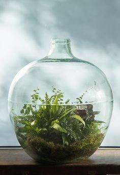 Vintage-Style Bottle Terrarium with Ferns por Ken Marten Wall Terrarium, Bottle Terrarium, Terrarium Plants, Succulent Terrarium, Bottle Plant, Terrarium Ideas, Dish Garden, Bottle Garden, Glass Garden