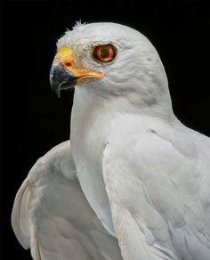 BIRD Gary Heery Book-completemmockup-157.jpg