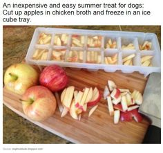 Summer treat for dogs