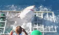 Video: Diver relives the terrifying moment a massive great white got in his cage