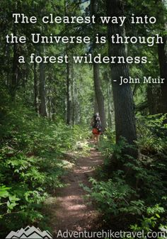 "John Muir Quotes, Hiking Quotes, Adventure Quotes, Wanderlust Quotes, ""The clearest way into the Universe is through a forest wilderness. Forest Quotes, Nature Quotes, Into The Woods Quotes, Walk In The Woods, The Journey, New Beginning Quotes Fresh Start, New Adventure Quotes, Nature Adventure, John Muir Quotes"