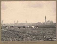 Nederland Schiedam