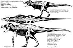 Tyrannosaurus rex skeletal diagram (BHI by Franoys on DeviantArt Dinosaur Drawing, Dinosaur Art, Cast Of Bones, Spinosaurus, Extinct Animals, Prehistoric Creatures, Tyrannosaurus Rex, Creature Design, Science And Nature