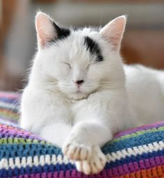 Cute cats & many other adorable animals