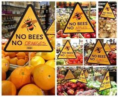 Without bees to help with pollination, food supply is at serious risk of decreasing markedly. BAN 'ROUNDUP' & MONSANTO!!!