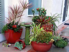 Succulent Container Gardens | by Joyce-Tex-Buckner