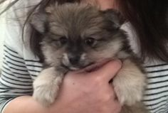Found a baby picture of my dog his name is Loki https://i.redd.it/caqg9e4mig001.jpg