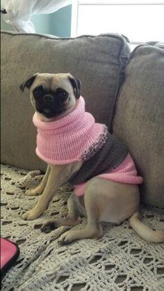 Dog sweater I made on Addie knitting machine
