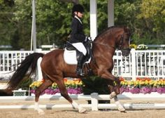 Emma Patterson of Houston, Texas brought her own Welsh Cob pony Wynshire's Valiant to win the 13 and under division at the 2012 USEF Dressage Seat Medal Final presented by Dressage Today®79.000%