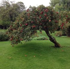 Poses References, Nature Aesthetic, Apple Tree, Mother Nature, Countryside, Greenery, Parks, Beautiful Places, Cottage
