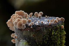 A diversidade visual dos cogumelos