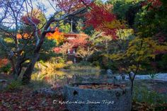 The garden and  Aji-ike Pond of Jōruri-ji temple (浄瑠璃寺) during the autumn season of 2014 in Kizugawa, Kyoto. The pond was constructed in 1150 by priests from Kōfuku-ji temple  (興福寺) in Nara. The stone lantern in front of the three-storied pagoda dates back to 1366 and the pagoda was reconstructed in 1178.