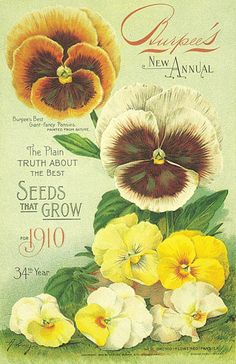 Burpee seeds vintage covers of pansies Vintage Diy, Images Vintage, Vintage Labels, Vintage Ephemera, Vintage Postcards, Vintage Pictures, Garden Catalogs, Seed Catalogs, Vintage Gardening