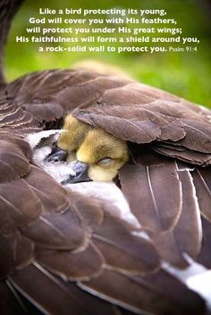 Under His wings, what a refuge in sorrow! ♪ ♫ How the heart yearningly turns to His rest! Often when earth has no balm for my healing, ♫ ♪ There I find comfort, and there I am blessed. ♪ ♫ .¸¸.ღ*´¨♫ ♪ ´¨*ღ.¸¸. ♪ ♫ Under His wings, under His wings, ♫ ♪ .¸¸.ღ*´¨♪ ♫ ´¨*ღ.¸¸. ♫ ♪ Who from His love can sever? ♪ ♫ Under His wings my soul shall abide, Safely abide forever. -Cushing & Sankey   https://www.youtube.com/watch?v=qeHcf_EtZ6A