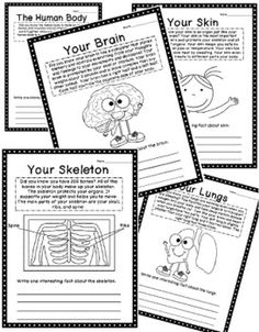 The Human Body Worksheet Packet for 1st-3rd Graders - Mamas ...