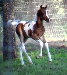 Dream horses!