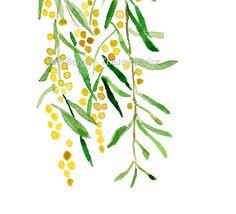 Lámina acuarela de Mimosa, Mimosa amarillo verde Peridot, arte botánico, Mimosa impresión y fresca decoración casera, arte de edición limitada