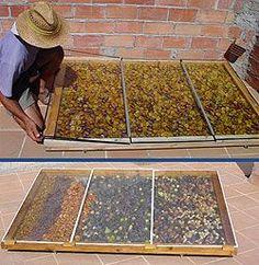 AlSolfruits, secador deshidratador solar directo | Terra.org - Ecología práctica