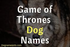 Game of Thrones Dog Names – Unique Male and Female Names Girl Dog Names, Female Dog Names, Best Dog Names, Puppy Names, Attitude Caption For Instagram, Instagram Captions For Friends, Beautiful Dog Names, Black Dog Names, Big Biceps Workout