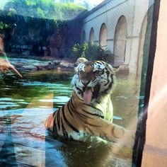 Mike VI thinks the football team has the season licked.