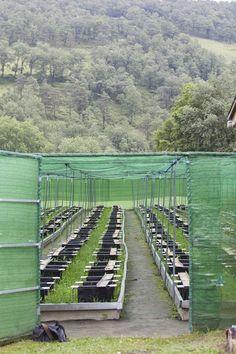 Granja de caracoles ecológicos Barraskibide. Lendoño Goikoa, Orduña (Bizkaia). EFE/David Aguilar