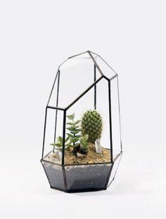 awesome terrarium