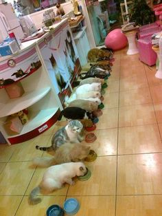 yummy meal at cat cafe,Thailand.