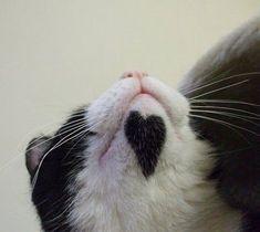 見ているだけで幸せになれそうな『ハート模様』でけしからん猫たち