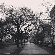 Sigue lloviendo. Ya desarrollando branquias #rain #greyday #sky #grey #clouds #SanNicolas #PlazaLavalle #Comuna1 #BuenosAires #Argentina (en Plaza Lavalle)