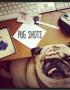 Pug obssessed like our CMO @carina_hw... Here is your 2:30 pick-me-up from @Glossi