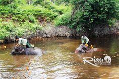 Ekowisata Taman Nasional Tesso Nilo | RIAU DAILY PHOTO