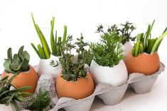 Egg & Succulent Centerpieces Using eggs, succulents, florals and herbs, create a fresh Spring centerpiece. Succulent Centerpieces, Simple Centerpieces, Centerpiece Ideas, Plant Crafts, Crafts To Do, Pictures Of Succulents, Summer Plants, Cactus, Natural Garden