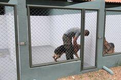 Dog Boarding Kennels, Dog Kennels, Luxury Dog House, Dog Kennel Designs, Dog Crate Furniture, Pit Bull, Crates, Pets, Kennel Ideas