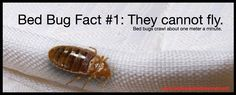 Did you know bed bugs cannot take flight?   Learn more about bed bugs at: http://www.bedbugsandbeyond.com/bed-bugs-101-basics/html  #bedbugs #pestelimination #newyork