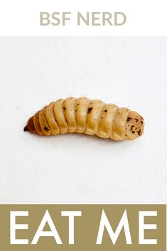 #entomophagy   #flexitarian #eatingbugs #entomophagy #bug   #bugs #futurefood #sustainability #eatinginsects   #environmentallyfriendly #newfoods   #foodrevolution #eatinghealthy #healthychef   #healthyeating #futurefoods #insects #bsfl   #foodsecurity #proteindiet #maggots #blacksoldierflylarvae Healthy Chef, Healthy Eating, Black Soldier Fly, Edible Insects, Chicken Feed, Food Security, Protein Diets, Food Waste, Nutritious Meals
