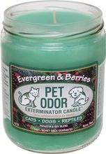 Buy Pet Odor Exterminator Candle -  Evergreen & Berries 13 oz Jar Candle to remove all your pet odors. Burns for 70+ hours!