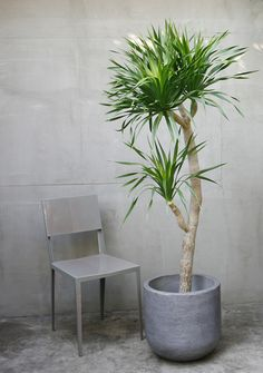 Fake Plants, Cool Plants, Green Plants, Indoor Garden, Garden Pots, Indoor Plants, Ornamental Plants, Foliage Plants, Dracaena Plant