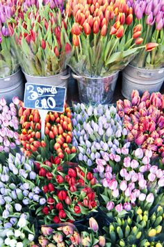 Tulips in Columbia Road flower market