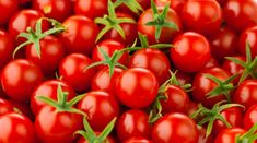 Growing Tomatoes Cherry tomatoes are yummy, easy to grow and productive plants. Learn how to grow them in pots for a successful harvest. - No matter your location, if you have access to even moderate sun, growing cherry tomatoes in pots is for you.