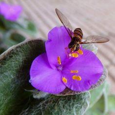お食事中を撮る。 パパラッチはワタシ。   #insect #flower #虫 #花