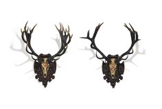 Two Imperial And Royal Stag Trophies, from Schloss Eckartsau, Austria. how much for xmas raindeer ?
