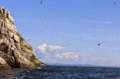 Sledge Island near Nome, Alaska