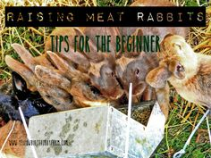 When I got into raising meat rabbits six months ago, I really didn't know what to expect. I knew the basics, had done some research, and had owned {pet} rabbits before. But as far as raising them a...