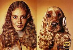 Cesar Dog Food | Mascotas y dueños
