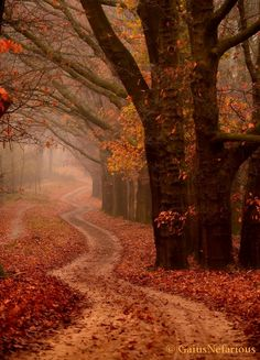 Ede, the Netherlands  Fall
