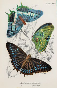 Beautiful Butterflies in Green Brown & Blue by PaperPopinjay, $10.00