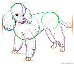 How to draw a french poodle | Step by step Drawing tutorials