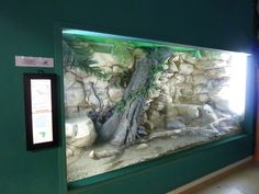 Nile monitor enclosure